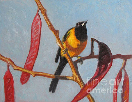 black crested oriole on Huaje tree by Judith Zur