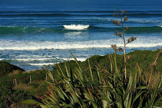 Terry Perham - Black Head Beach Dunedin