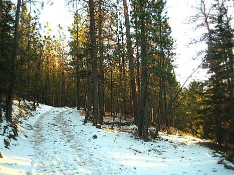Black Hills Forest by Gloriana Hernandez
