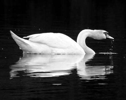 Black Pond Swans #2 BW by Kira Varszegi