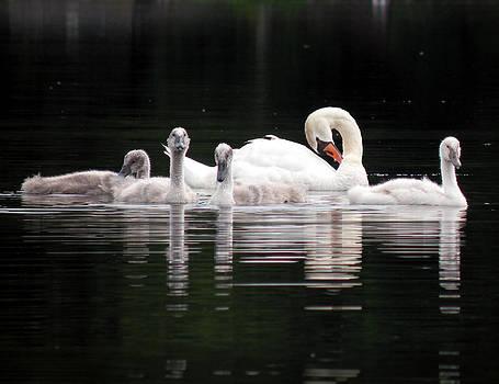 Black Pond Swans #3 color by Kira Varszegi