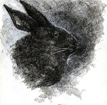 Black Rabbit by Beka Burns