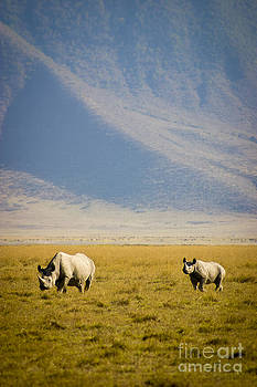 Darcy Michaelchuk - Black Rhinos Walking Across the Crater