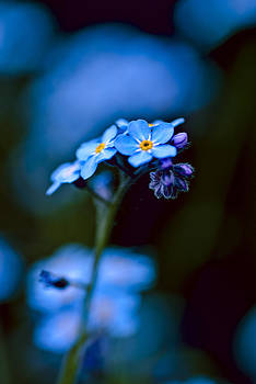 blauer Traum by Andreas Hensel