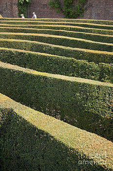 Blenheim palace maze by Andrew  Michael