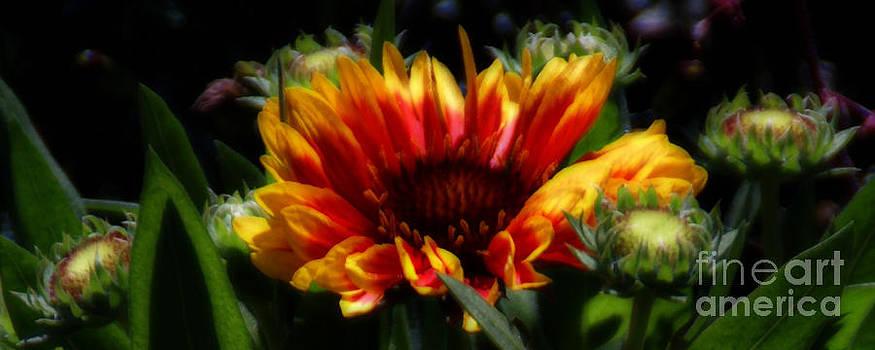 Linda Knorr Shafer - Bloom