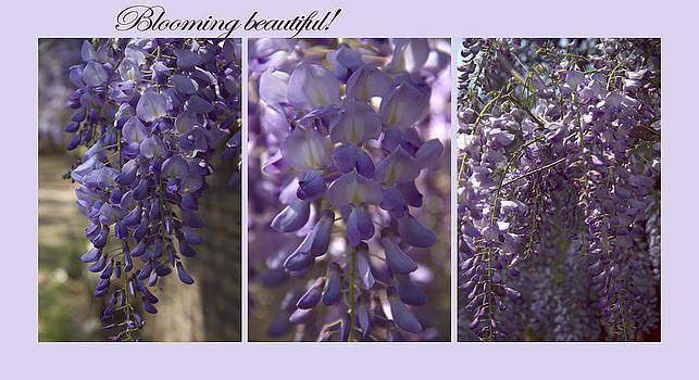 Blooming beautiful by Taschja Hattingh