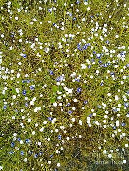 Blue and white wonder by Bgi Gadgil
