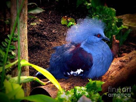 Blue Beauty  by Ashley Vipond