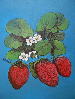 Blue Berries by Timothy Hawkins
