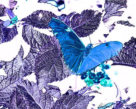 Diana Haronis - Blue Butterfly