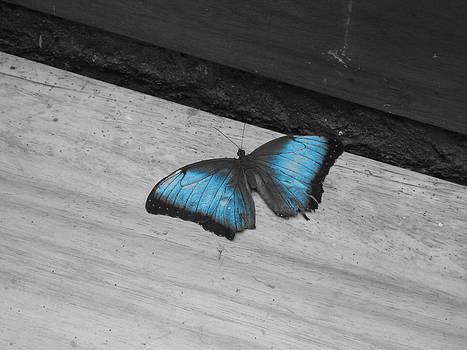 Blue Butterfly by Gloriana Hernandez