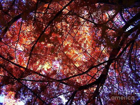 Blue Canopy by Iris M Gross