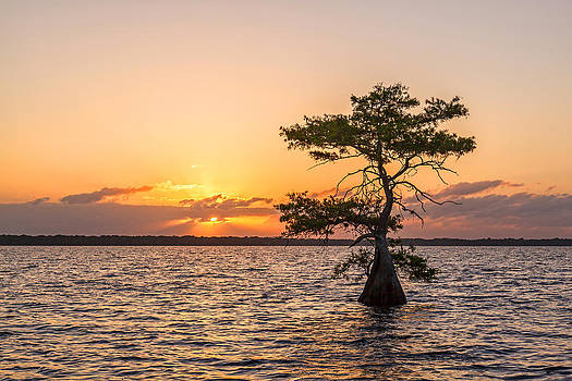 Blue Cypress Lake Sunrise by Claudia Domenig