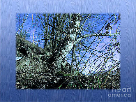 Blue Early Spring by Michelle Bergersen