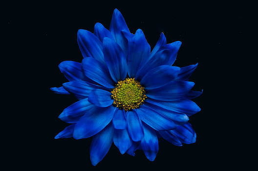 Blue Flower by Ron Smith