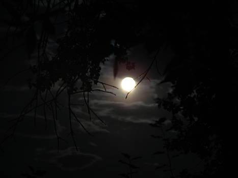 Blue moon by K Walker