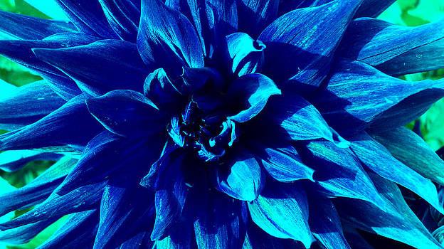 Blue Passion by Tinatini Popiashvili