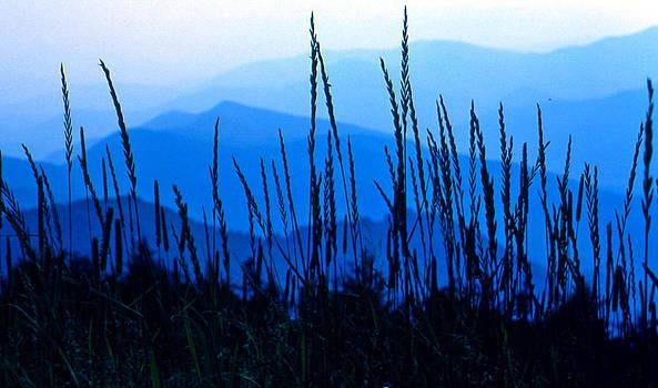 Blue Ridge Mountains by Lori Miller