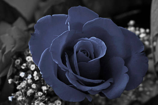 Blue Rose by Rick Mutaw