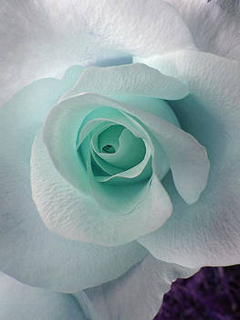 Blue Rose by Robin Hewitt