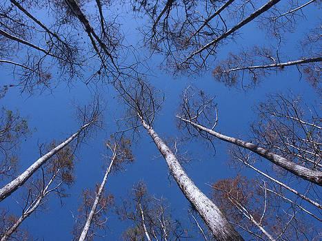 Blue Treetops by Bill Lucas