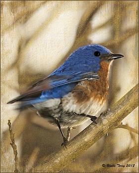 Bluebird...Look My Way by Terry Jacumin