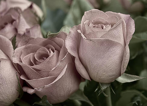 Blushed Rose by Kathleen Holley