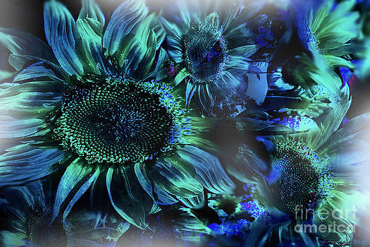 Blushing Sunflowers by Christine Mayfield