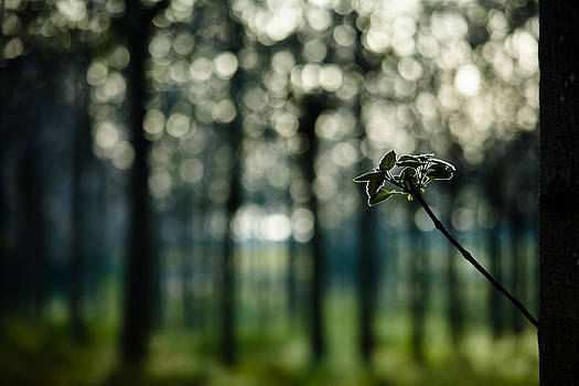 Bokeh And Branch by Victor Bezrukov