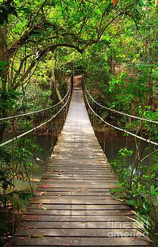 Bridge to the jungle by Noppakun Wiropart