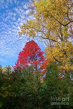 Byron Varvarigos - Bright Autumn Color