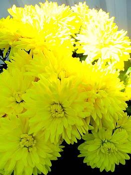 Bright Mum's by Amy Bradley