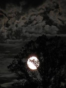 Shane Brumfield - Bright Night