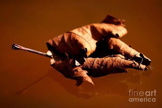 Brown in brown by Thomas Splietker