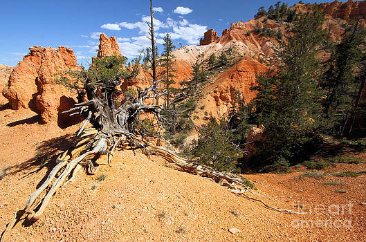 Adam Jewell - Bryce Canyon Forest