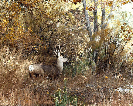 Buck Incognito by Margaret  Slaugh