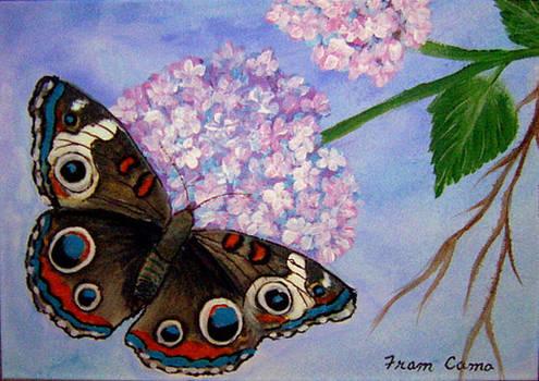 Buckeye Butterfly by Fram Cama