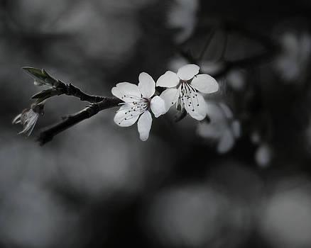 Budding Tree 2 by Sherry Fain
