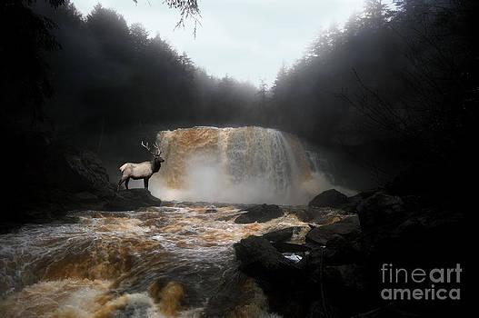 Dan Friend - Bull elk in front of waterfall