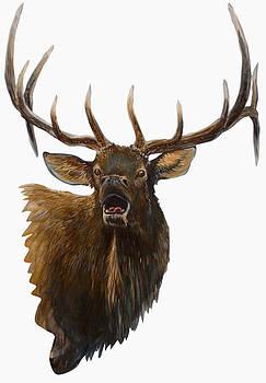 Bull Elk by Scott Thompson
