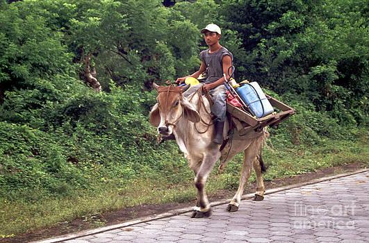 John  Mitchell - BULL RIDER Ometepe Nicaragua