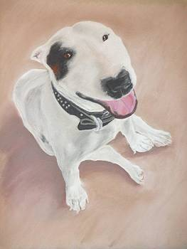Bull Terrier by Greg  Curtis