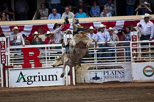 Bull With Some Big Air by Darren Langlois