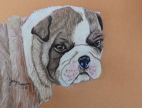 Bulldog Pup by Jody Neugebauer