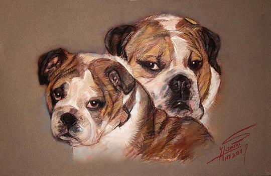 Ylli Haruni - Bulldogs