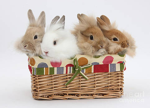 Mark Taylor - Bunnies In A Basket