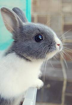 Bunny by Sunkies Fang