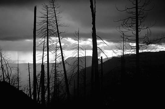 Charmian Vistaunet - Burnt Forest - Yosemite