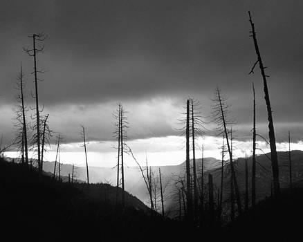 Charmian Vistaunet - Burnt Forest II - Yosemite